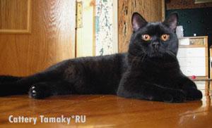 Верите ли вы в то что черные кошки